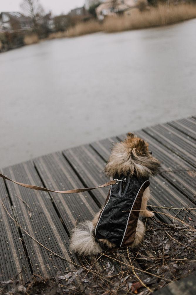 regenjas-voor-je-hond