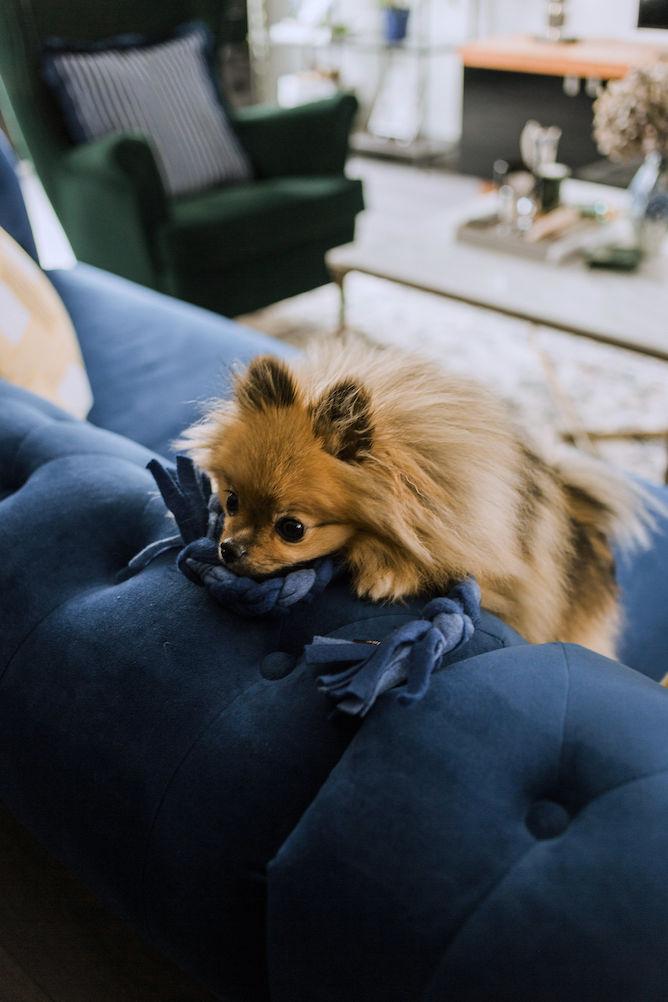 ByJax speeltouw hond
