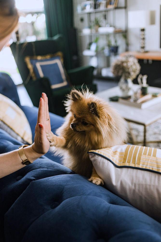 dagelijkse routine voor je hond